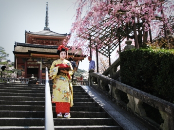 Geisha and Cherry Blossom, Kyoto, Japan