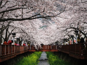 The Vanishing Point – Jinhae Gunhangje