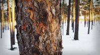 Lapland 6