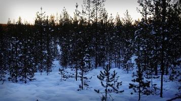 Lapland 2