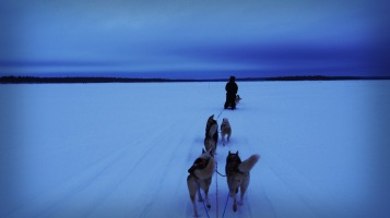 Husky sakari on the frozen lake inari - the huskys really like to run, they are exciting running out.