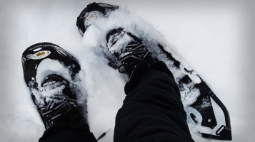 A special gear for snowshoeing in the wild - you see birds, and you see elk