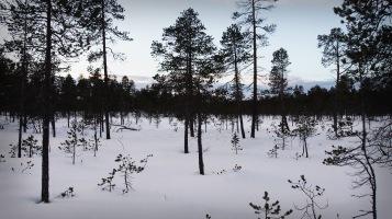Lapland 7