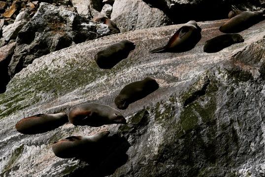 Milford Sound 19