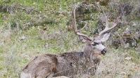 zion-wild-animals