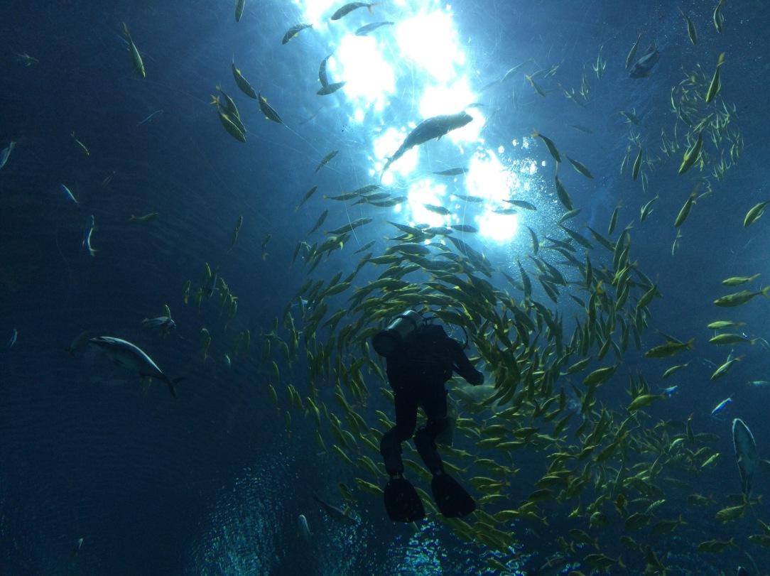 Hengqin Aqua Park - Fish