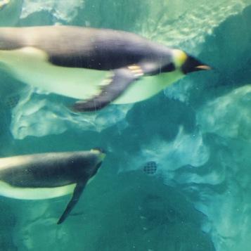 Hengqin Aqua Park - Penguin 2