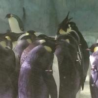 Hengqin Aqua Park - Penguin
