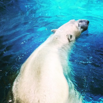 Hengqin Aqua Park - Polar Bear