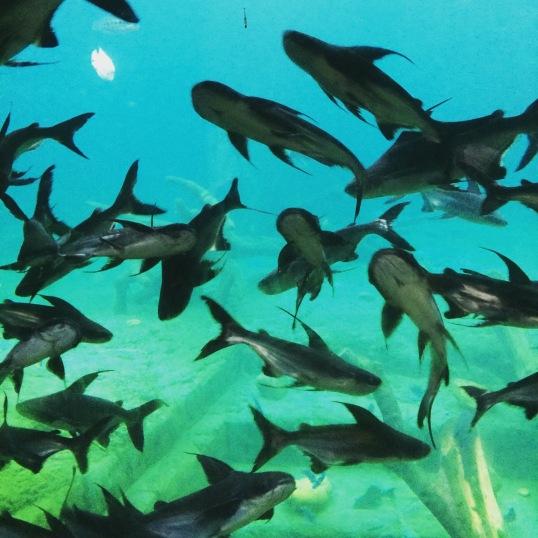Hengqin Aqua Park - Sharks