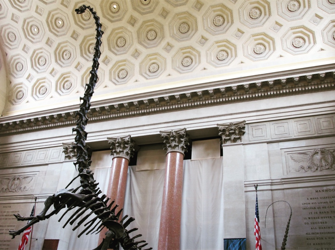 5. American Museum of Natural History