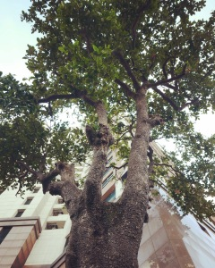 Hanoi - Maison Centrale Almond Tree
