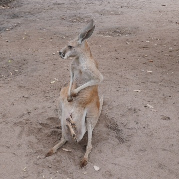 Perth - Caversham Wildlife Park 14