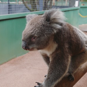 Perth - Caversham Wildlife Park 1