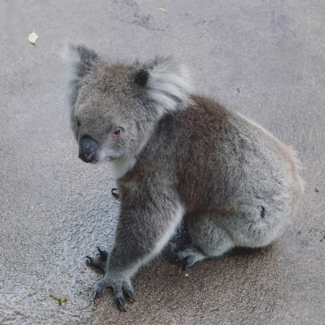 Perth - Caversham Wildlife Park 2