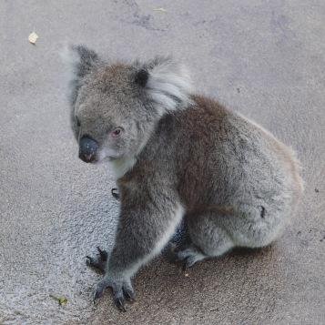 Perth - Caversham Wildlife Park 2