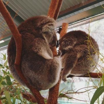 Perth - Caversham Wildlife Park 3