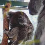 Perth - Caversham Wildlife Park 4