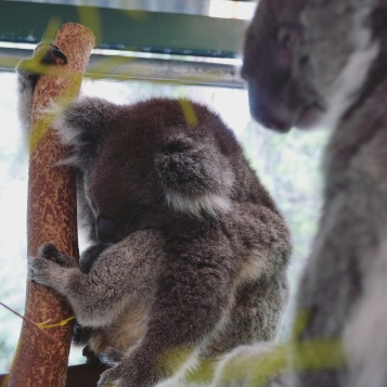 Perth - Caversham Wildlife Park 4