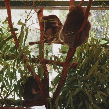Perth - Caversham Wildlife Park 5