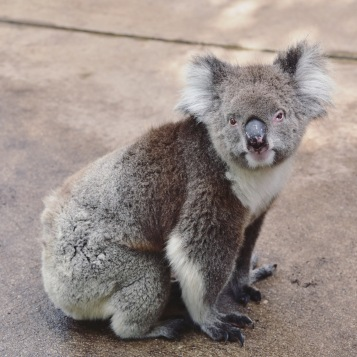 Perth - Caversham Wildlife Park 6