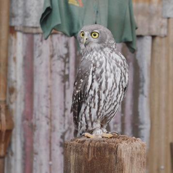 Perth - Caversham Wildlife Park 8