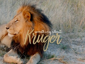 Something about… Kruger
