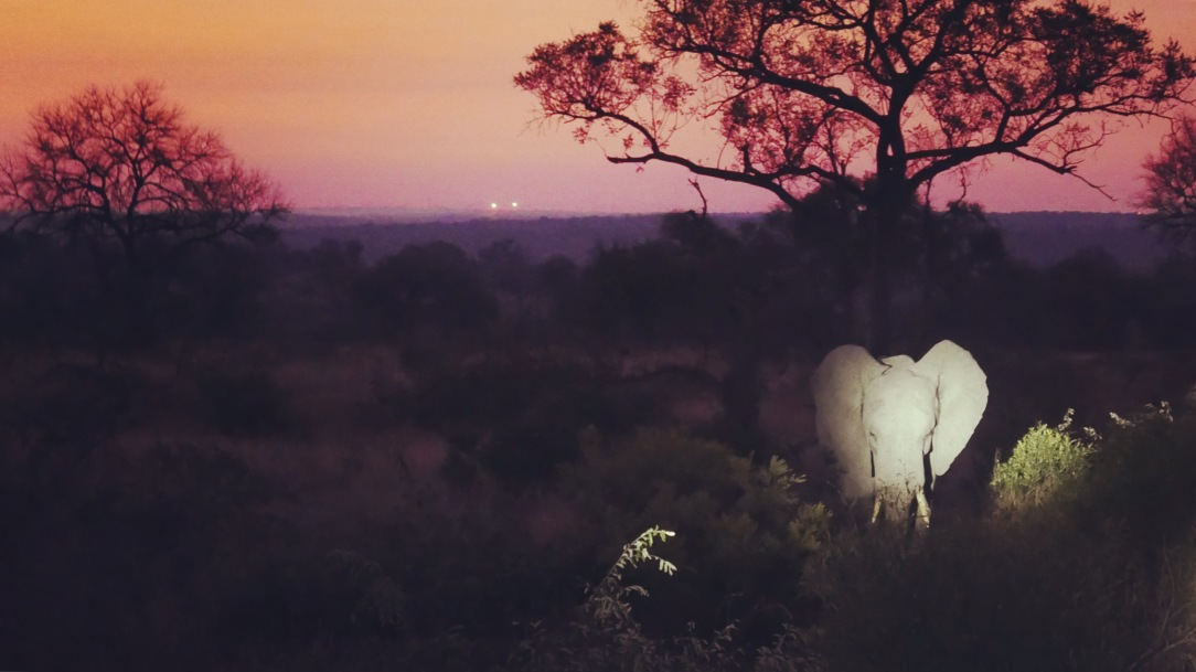 South Africa, Kruger - Safari Night Elephant