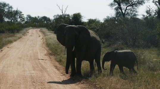 South Africa, Kruger - Safari (4)