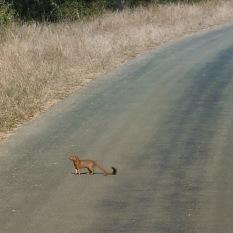 South Africa, Kruger - Safari (7)