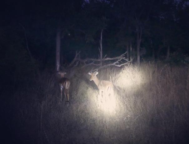 South Africa, Kruger - Safari Night Safari (2)