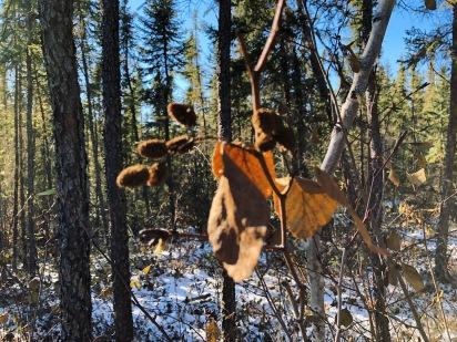 yellowknife ingraham trail - 7