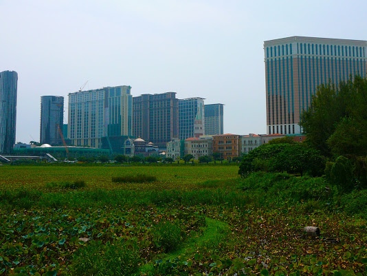 Jog along an eco-zone wetland