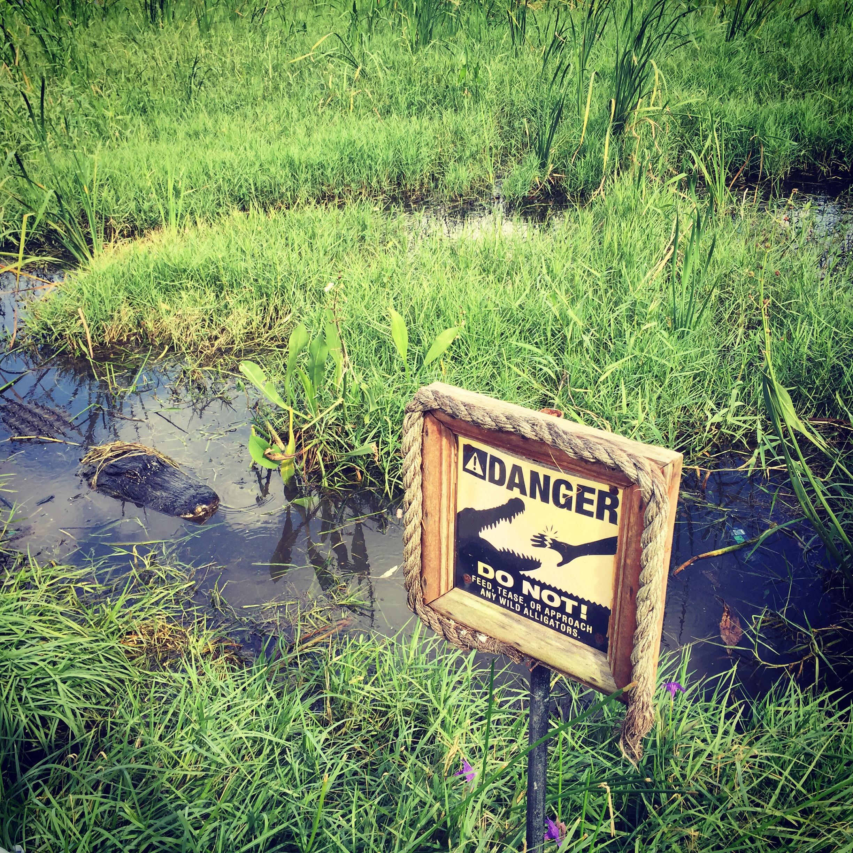 Day 4 EverGlades Safari Park 1