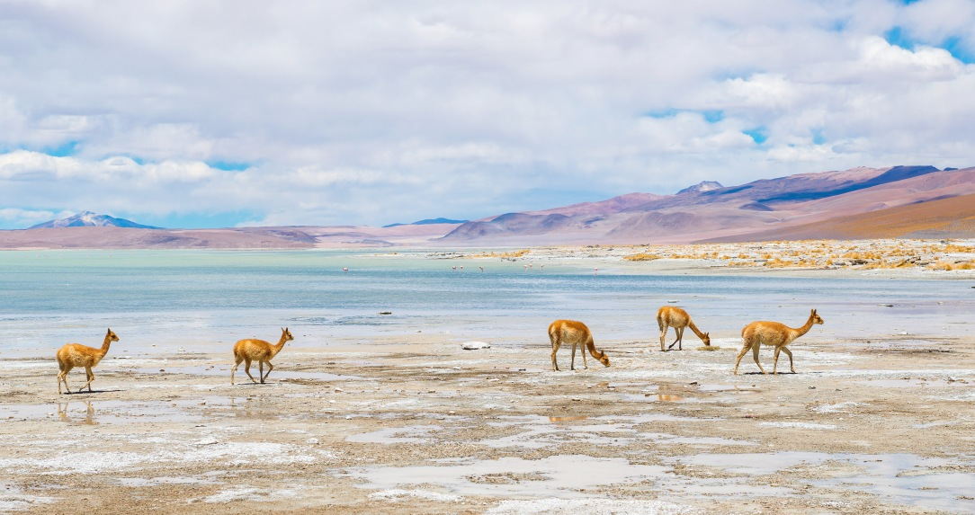 Atacama Salt Flat, Toconao town, Altiplanic Lagoons, Socaire, stargazing 2